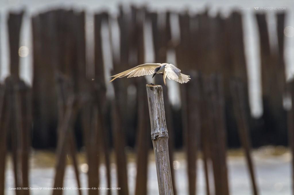 BIRD100D