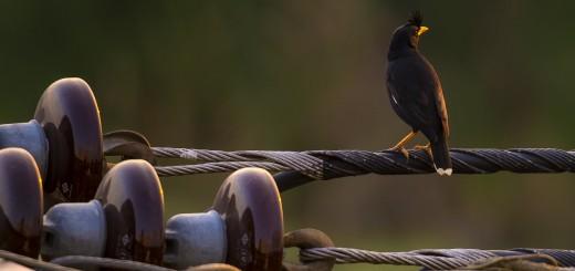 EveningBird