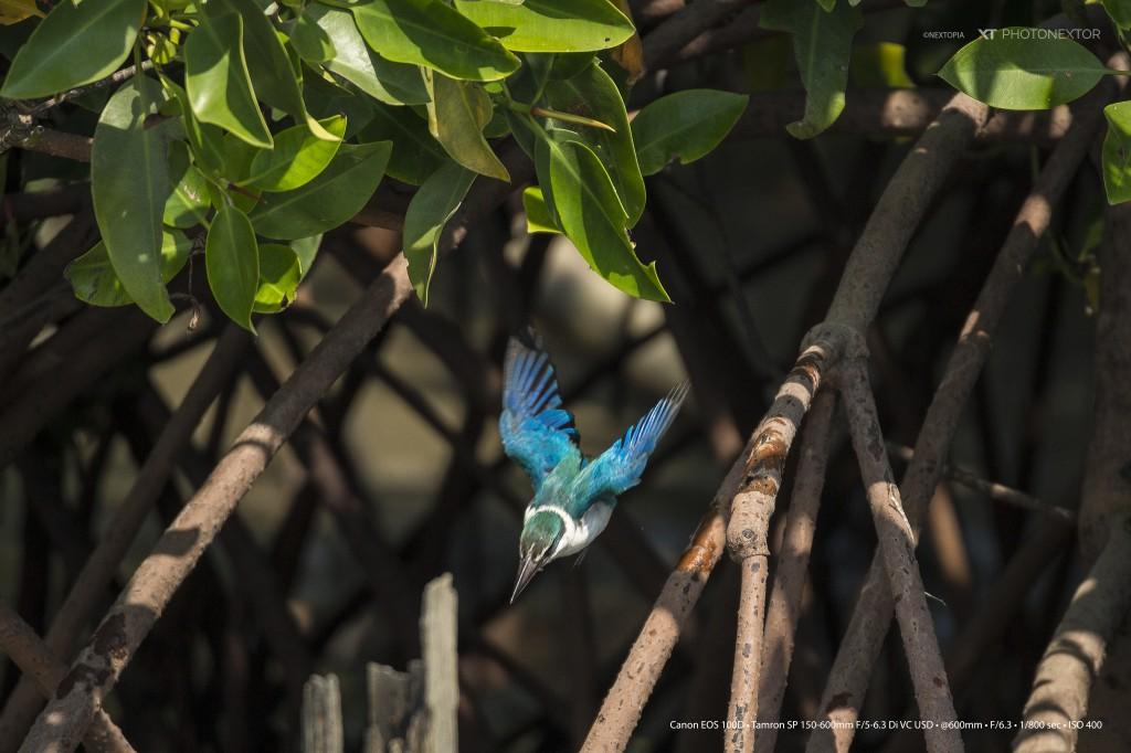 Kingfisher_1