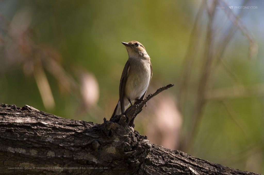 bird600