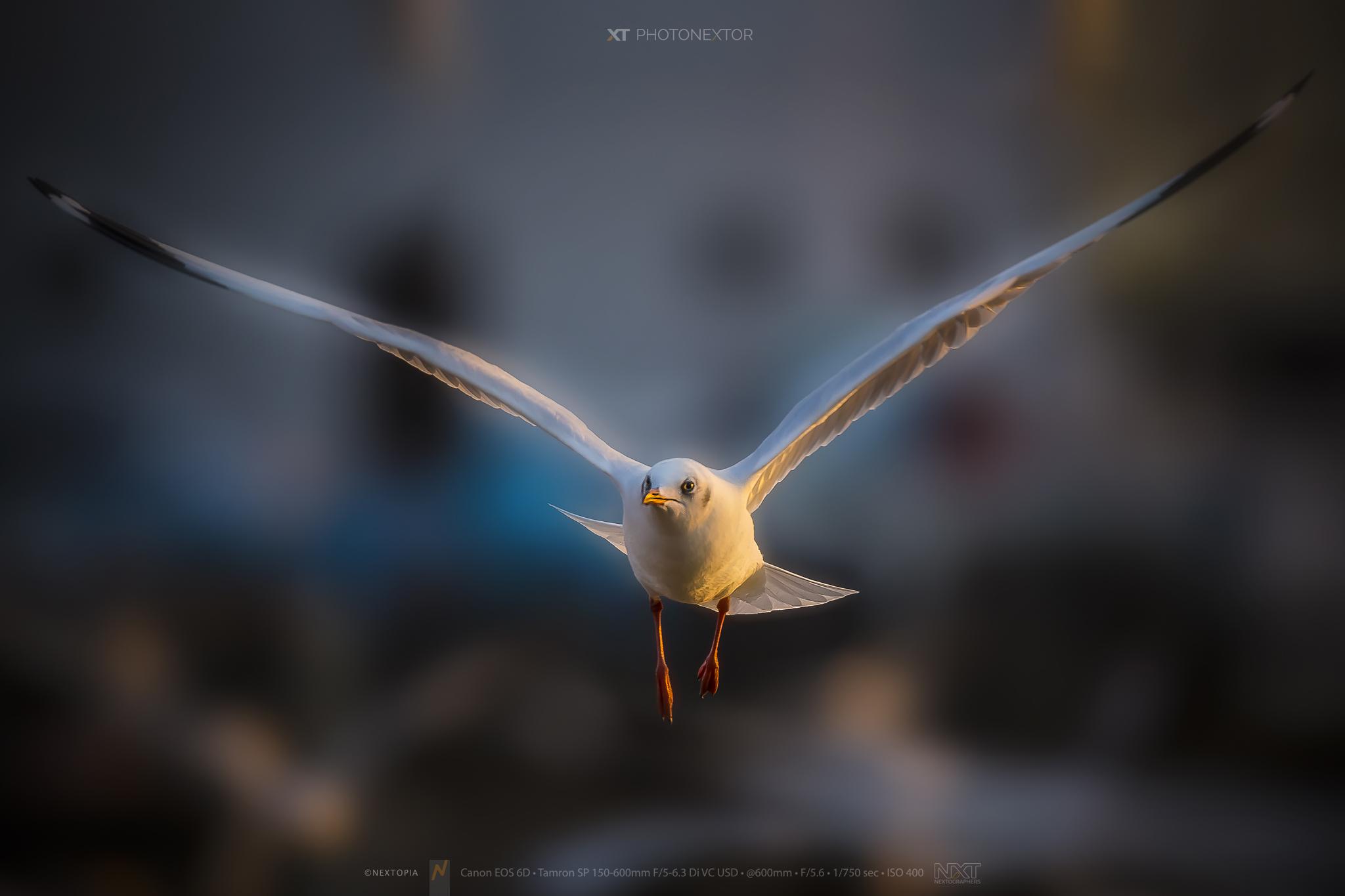 Bird_150600_8